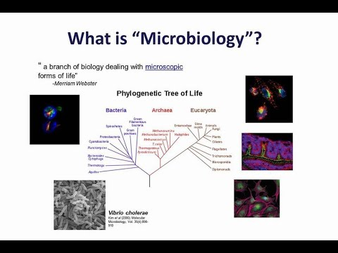 Flow Cytometry In Microbiological Research