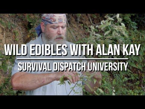 Wild Edible Plants With Alan Kay