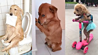 Smart Dogs  Cute and Funny Dog Videos Compilation