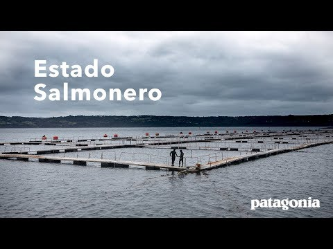 Ramón Navarro Illustrates Why Chile's Salmon Industry Is an Environmental Emergency