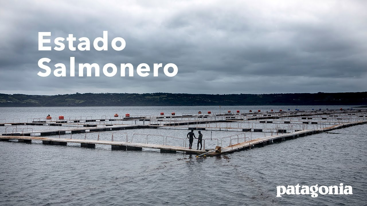 Estado Salmonero | Uncovering Chile's Corrupt Salmon Industry