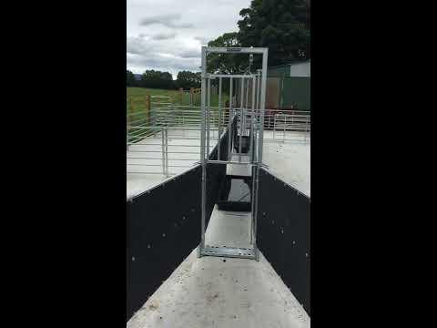 Sheep Handling System