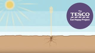 See how oats get from farm to fork, ready for your warm, tasty bowl of porridge
