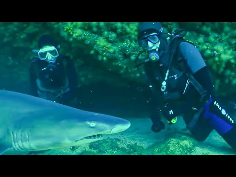 Breathtaking Experience! Diving with Sharks - Indian Ocean With Simon Reeve - BBC