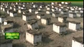 मधुमक्खी पालन है लाभ का व्यवसाय