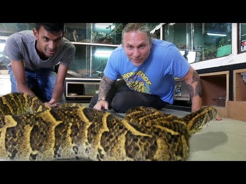 DEADLIEST SNAKES IN THE WORLD!!! NEW SNAKE UNBOXING!  BRIAN BARCZYK