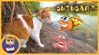 Котик Рыжик едет на рыбалку, ест саранчу и знакомится с раками