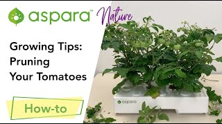Growing Tips: Pruning your tomatoes