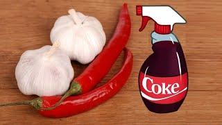 4 Homemade Organic Pesticide Every Gardener Must Know
