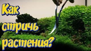 Стрижка растений в аквариуме! Как стричь аквариумные растения