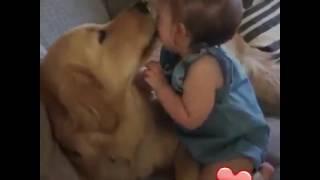 Jak zwierzęta i dzieci się dogadują