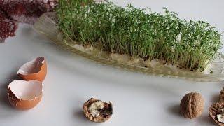 видео Кресс-салат
