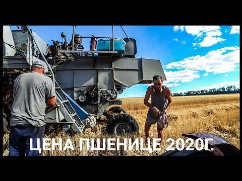 Цена пшенице для одноосибныков. Уборка пшеницы 2020! Нива СК-5 - нервоядная Хищница