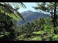 #69 Dominica, Morne Diablotins (1447m) - Climbing tallest highest mountain in Dominica