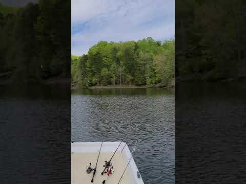 Download Bald Eagle Fishing