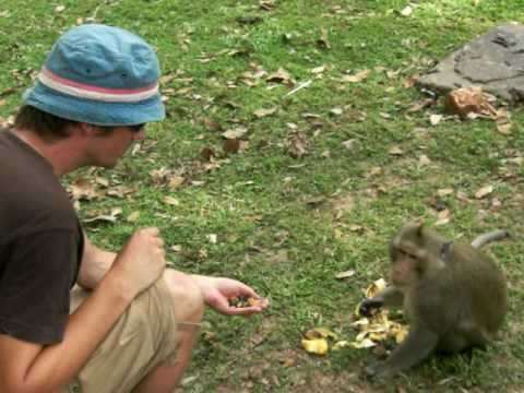 feeding the monkeys (near Angkor Wat - Cambodia)