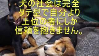 もう悩まない正しい犬の飼い方→http://asunarobest.com/pet/ 今、世の中...