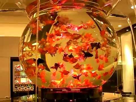 Thiết kế hồ cá trong nhà - Thiên đường cá cảnh