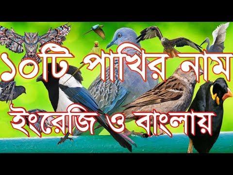birds name bengali - birds name bengali Video - birds name