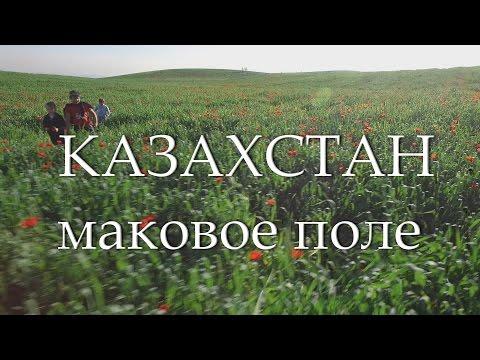Маковое поле Almaty City KAZAKHSTAN