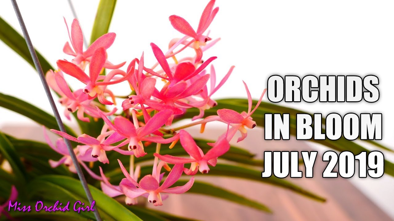 Orchids In Bloom July 2019 So Many Ups And Downs Youtube