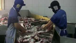 Polluted fish farms