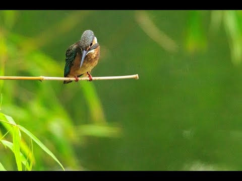acoustic guitar - Kingfisher by Mit Swithy