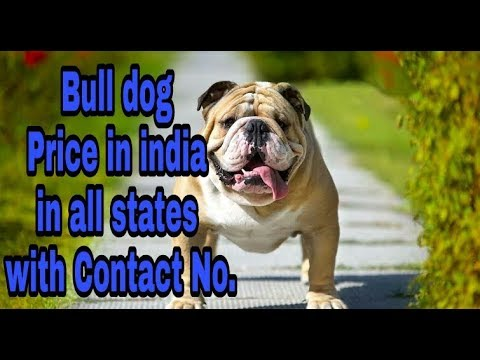 Bull Dog Price in india in all states with Contact No.    price in india   