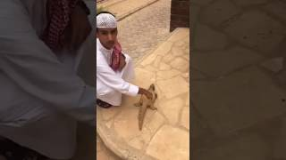New funny video 2017 arab muslim boy trying to be smart and what happend see