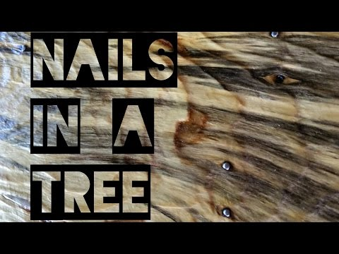 Nails in a Tree and Rocky Mountain High Chairs