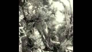 Alexandre Desplat - The rose acacia