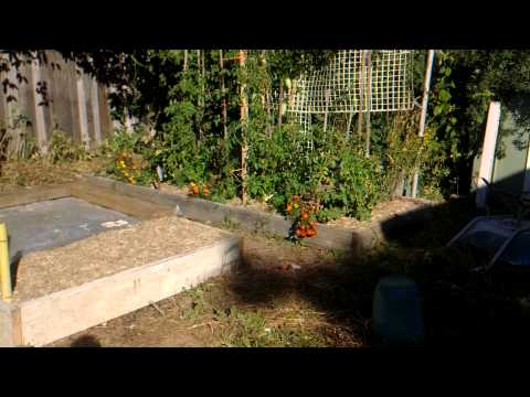 Re : Planting Brocoli, turning grass Travel Video
