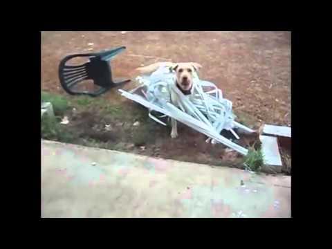 Lustiger Hund  Witzige videos zum totlachen