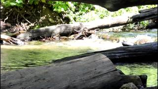 Creekside Meditation ~ Schumann