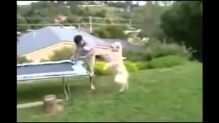 Ахахах собака поимела парня жесть
