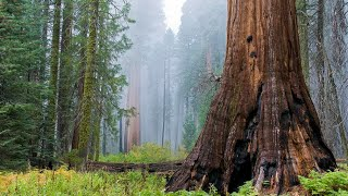 Visiting Sequoia National Park, National Park in California, United States