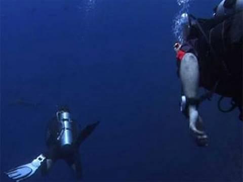 Shark Alarm - Palau