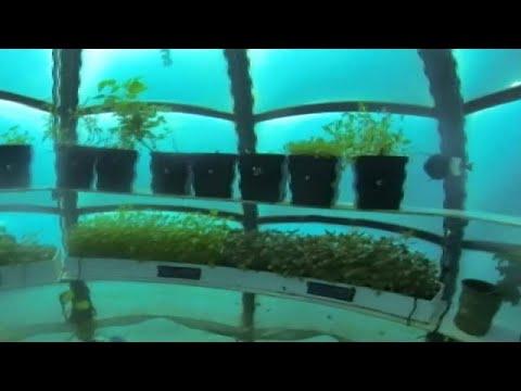 Estufas subaquáticas já são uma realidade