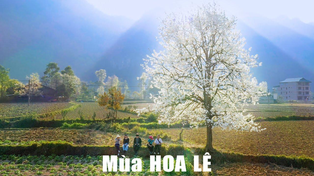 Thung lũng hoa lê cổ thụ ở Xuân Trường, Bảo Lạc, Cao Bằng - Pear Flower Valley Cao Bang Travel