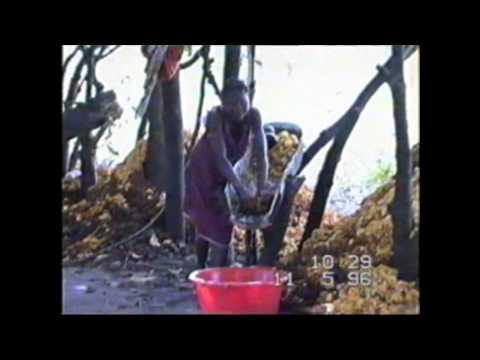 How to make cashew wine.Guinea-Bissau   Comment faire le vin de cajou  Как делают вино из кешью.
