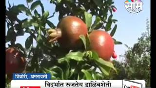 #Agrowon: Success Story of Rameshwar Kapse of Pomegranate Farming in Amravati