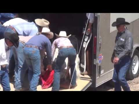 Horse Killed at the 2013 Cheyenne Frontier Days Rodeo