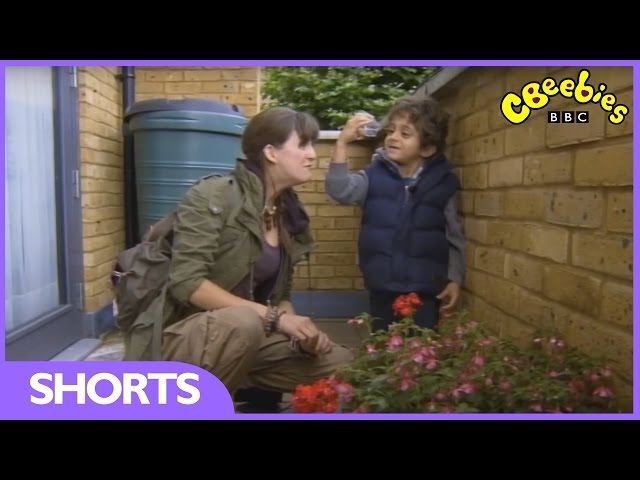 CBeebies: Mini Beast Adventure With Jess - Earwigs