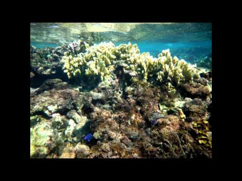 Tropical Marine Ecology - 2013 - MAR 388 - Stony Brook University