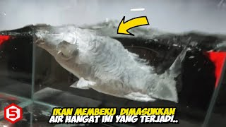 Pria ini Rendam ikan Beku ke dalam Air Hangat, Yang terjadi Selanjutnya Bikin Terkejut...