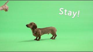 TIEKS - Sunshine feat. Dan Harkna (Sausage Dog Outtakes)