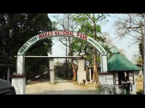 Manas National Park - Mathanguri, Assam, India.