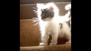 Пушистый комочек света. Котёнок