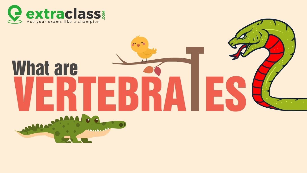 What are vertebrates ? | Biology | Extraclass.com