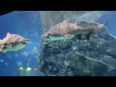 Океанариум в Бангкоке. Большие акулы, манты, скаты, рыбы.